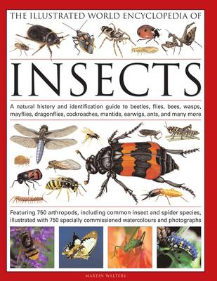 Illustrated World Encyclopaedia of Insects (BOK)