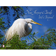 New Jersey Birds and Beyond (BOK)
