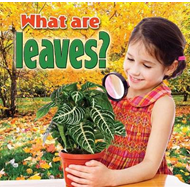 What are Leaves? (BOK)