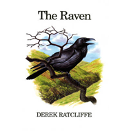 The Raven: A Natural History in Britain and Ireland (BOK)