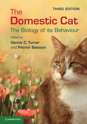 Domestic Cat (BOK)