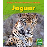 Rainforest Animals: Jaguar (BOK)