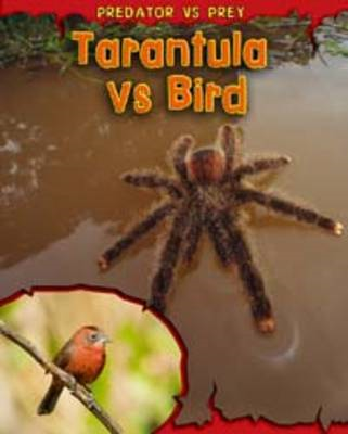 Tarantula Vs Bird (BOK)