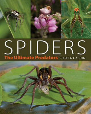 Spiders: The Ultimate Predators (BOK)
