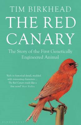 Red Canary (BOK)