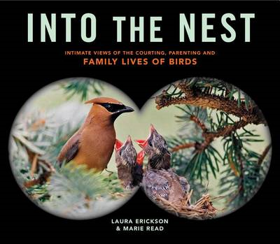 Into the Nest (BOK)
