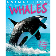 Animal Lives: Whales (BOK)