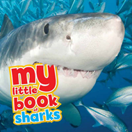 My Little Book of... Sharks (BOK)