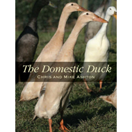 Domestic Duck (BOK)