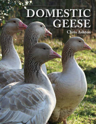 Domestic Geese (BOK)