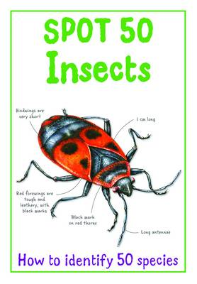 Spot 50 Insects (BOK)