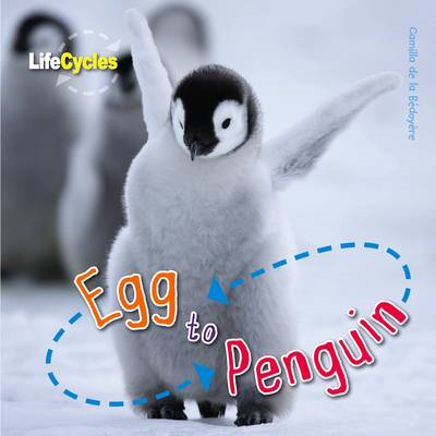 Life Cycles: Egg to Penguin (BOK)