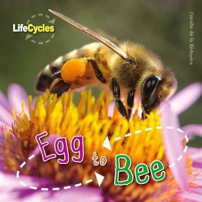 Life Cycles: Egg to Bee (BOK)