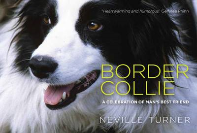 Border Collie (BOK)
