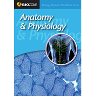 Anatomy and Physiology Modular Workbook (BOK)
