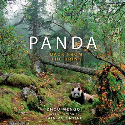 Panda: Back from the Brink (BOK)