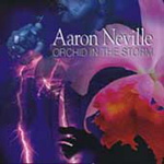 Orchid In The Storm (CD)