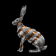 Jackrabbit (CD)