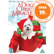 Produktbilde for Dog's Christmas Miracle (UK-import) (DVD)