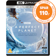 Produktbilde for A Perfect Planet (UK-import) (4K Ultra HD + Blu-ray)