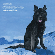 Produktbilde for Animal Companionship (VINYL)